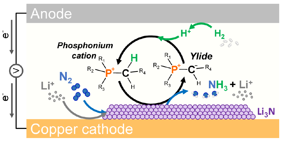 Electrosynthesis of ammonia from H2 and N2 via a phosphonium salt proton donor.